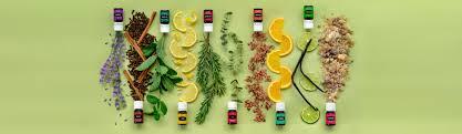 Botes de aceites y ramos de plantas medicinales