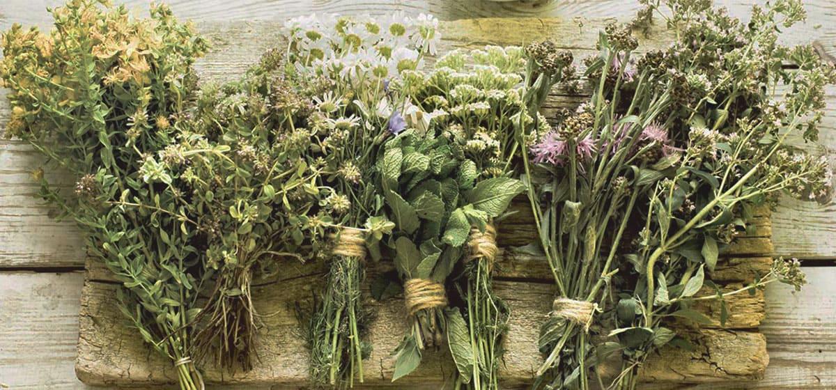 Ramos de hierbas secas