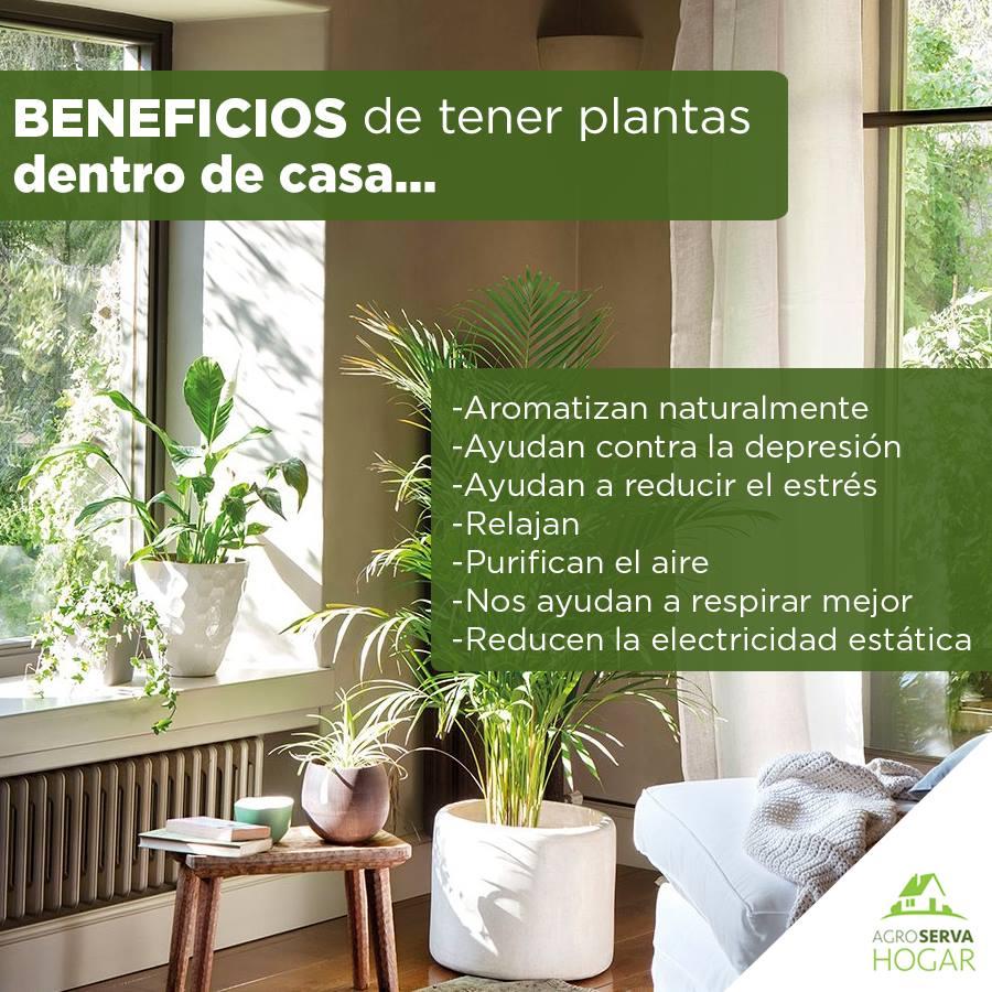 beneficios de las plantas en la casa