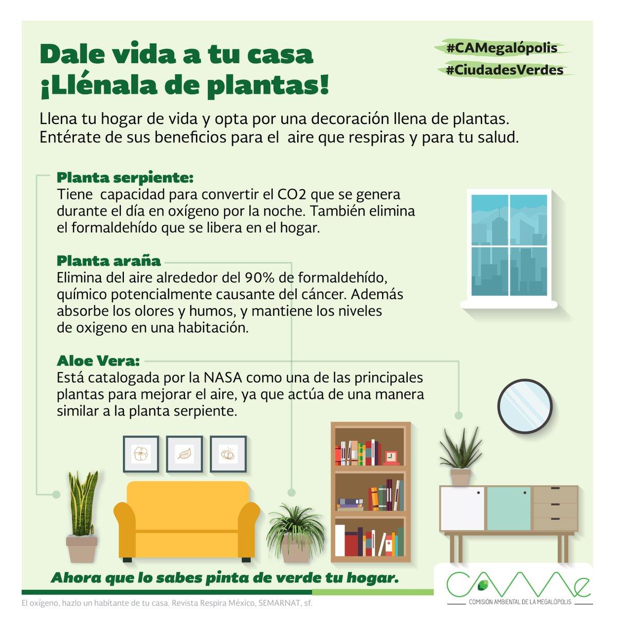 purificación de plantas en tu hogar