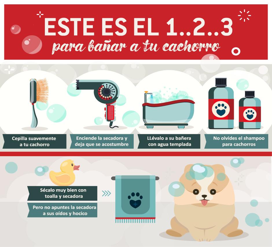 tips para bañar a tu perro