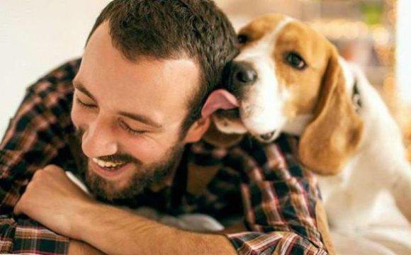 tips para tu perro