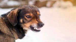 tipos de rabia canina
